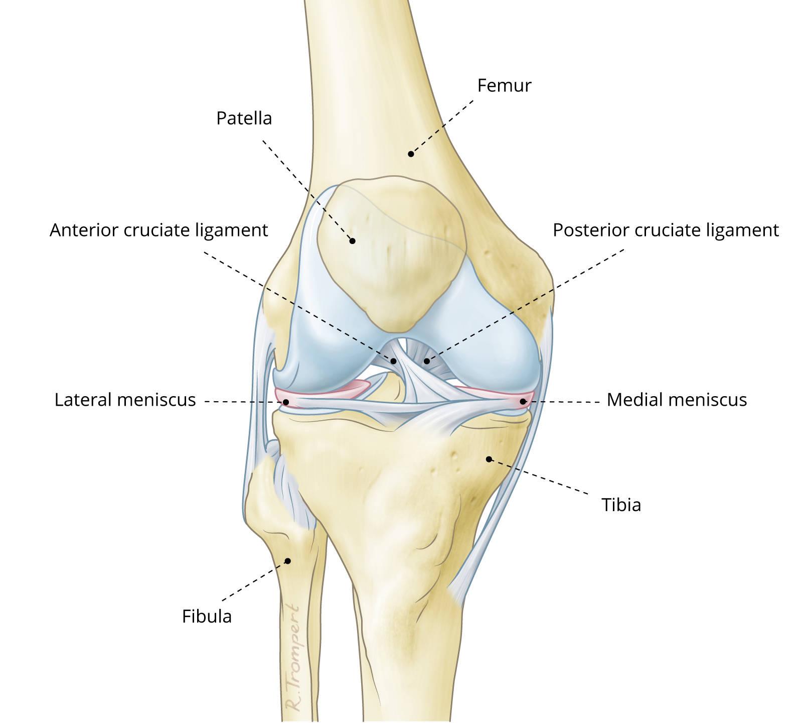 ATRO Medical - meniscus vervanging - replacement - ATRO Medical